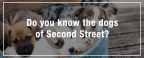 Dogs of Second Street Quiz