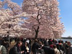 DC LOTTERY CHERRY BLOSSOM PHOTO CONTEST