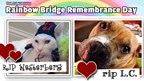 St. Louis Post-Dispatch | Rainbow Bridge Remembrance Day