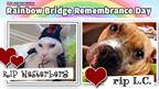 St. Louis Post-Dispatch | Rainbow Bridge Remembrance Day