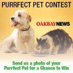 Purrfect Pet Contest