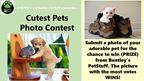 Bentley's PetStuff Cutest Pets Photo Contest