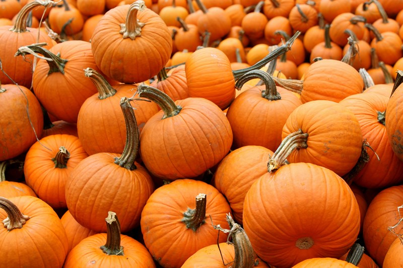 Carolyn's Pumpkin Patch - Quiz