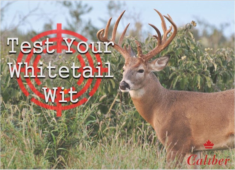 Test Your Whitetail Wit