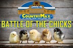 Battle of the Chicks