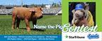 St. Paul Saints Name the Pig 2017 Contest