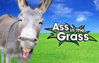 Qfm96 - 2017 Ass in the Grass
