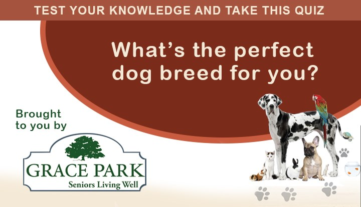What's the Perfect Breed of Dog for you?