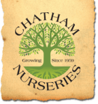 Star Spangled Sweepstakes - Chatham Nurseries