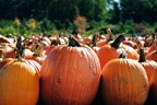 Swag Alert: Win 5 tickets to Boone Hall's Pumpkin Patch!