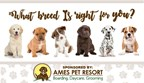 What Breed of Puppy is Perfect for You Quiz