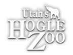 Zoo Lights Essay Contest - Nov/Dec 2017