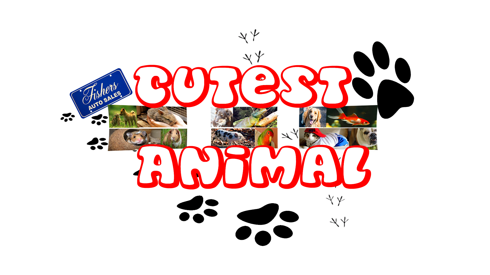 Fisher s Auto Sales Cutest Animal Contest