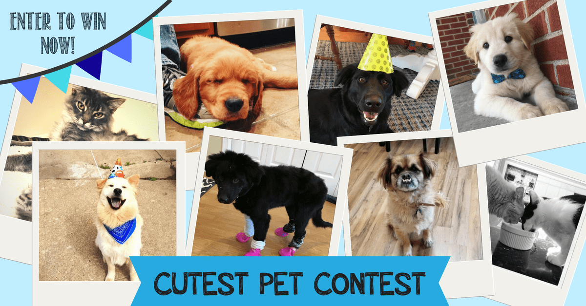Jay Master Of The Puppy Dog Eyes Poo Squad Cutest Pet Contest 2018