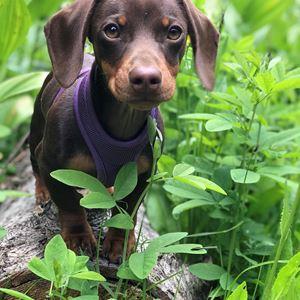 Cutest Pet Contest   Site   idahocountyfreepress com