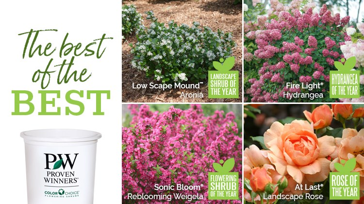 Best of the Garden Giveaway presented by Proven Winners