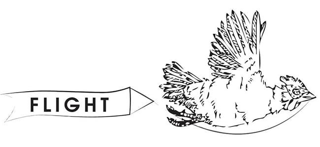 Flight Newsletter