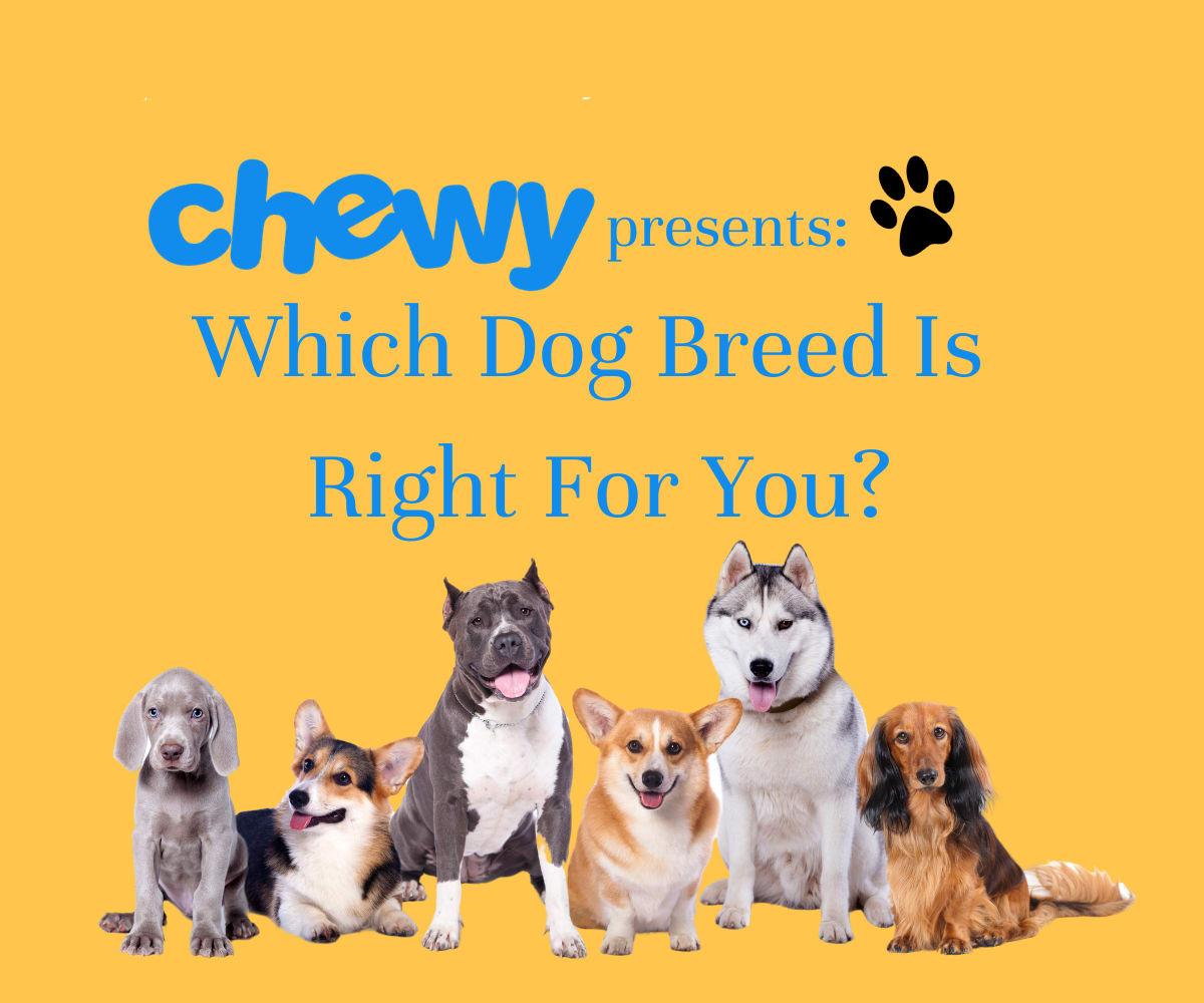 Dog Breed Quiz Image