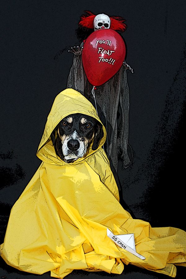 cash as georgie from it pet costume photo contest